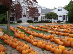pumpkin patch is ready